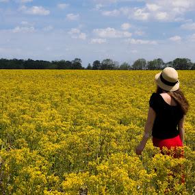 Goldenrod 1 by John  Pemberton - Landscapes Prairies, Meadows & Fields ( blooming, goldenrod, summer, yellow, landscape )