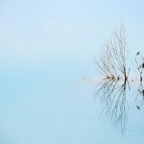 Lonely by Jenni Ertanto - Nature Up Close Trees & Bushes ( water, reflection, tree, nature, landscape )