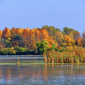 Autumn In The Wetlands by Howard Sharper - Landscapes Waterscapes ( wetlands, reflections, autumn colors, autumn leaves, autumn,  )