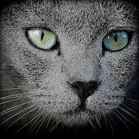 Miawwwwww.... by Francis Xavier Camilleri - Animals - Cats Portraits