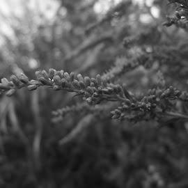 by Carlos Hidalgo - Nature Up Close Gardens & Produce (  )