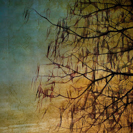 Tree in winter, a variation on the beauty .... by Ivan Drobný - Digital Art Abstract ( winter, tree )