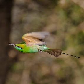|| Flight || by Indra Maji - Animals Birds