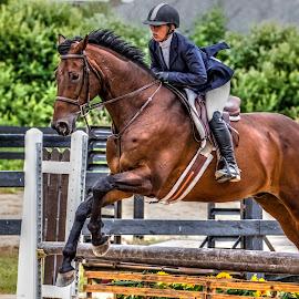 Jump by Robert George - Animals Horses