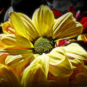 Natures Beauty by Michelle Dimascio - Flowers Single Flower ( nature, plants, flower )