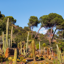 Cactus  and suculent plants garden by Roberto Sorin - Nature Up Close Trees & Bushes ( plant, conception, ornate, architecture, travel, botanical, spain, mirror, tranquil, sky, tree, nature, andalusia, idyllic, botanic garden, andalucia, mirador, pine, building, spanish, peaceful, park, flora, green, beautiful, tourism, traditional, lake, relaxation, sign, panoramic view, palm tree, tourist, european, malaga, blue, outdoor, tranquility, view, histórico, garden, natural, jardín botánico, cactus,  )