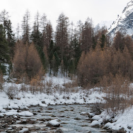 Pontresina, Val Roseg, Graubünden, Switzerland by Serguei Ouklonski - Landscapes Mountains & Hills ( mountain, wood, no person, tranquil scene, frost, frozen, landscape, nature landscape, sky, tree, cold, nature, no people, snow, cold temperature, switzerland, weather, pine, water, conifer, wild, flora, lush, scenics, forest, beauty in nature, scenic, graubunden, winter, environment, season, outdoors, tranquility, day, growth )