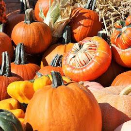 pumpkins by Carola Mellentin - Public Holidays Halloween (  )