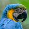 Parrot Butterfly World.jpg