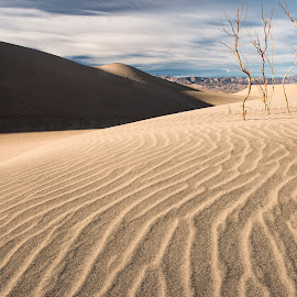 Sand Dune by Nancy Arehart - Landscapes Deserts ( death valley, sand, leading lines, sand dunes, texture )