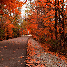 The wonderful walk! by Avishek Bhattacharya - City,  Street & Park  City Parks ( monon trail, carmel,  )