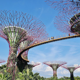 Super Trees #2 by Koh Chip Whye - City,  Street & Park  City Parks (  )