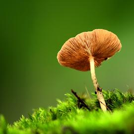 by Nandes Sicknoise - Nature Up Close Mushrooms & Fungi