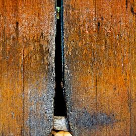 Staring by Steven De Siow - Uncategorized All Uncategorized ( external wall, stare, wooden wall, dog, animal,  )