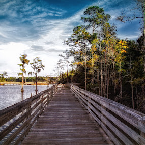 Bellingrath Gardens by Dave Walters - Landscapes Waterscapes ( fall, nature, wood, swamp, water, colors )