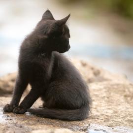 watching out by Annette Flottwell - Animals - Cats Kittens ( gato, kitten, cat, negra, gatita, black,  )