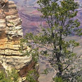 Colors; Grand Canyon National Park by Michael Deak - Landscapes Deserts
