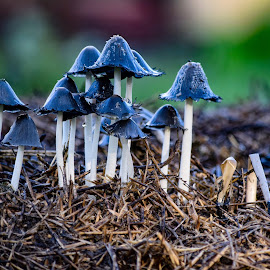 by Tina Daggett - Nature Up Close Mushrooms & Fungi