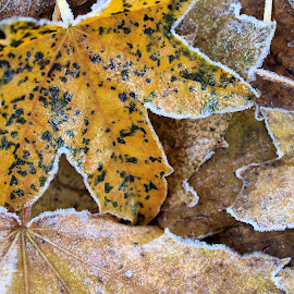 autum into winter by Sue Rickhuss - Nature Up Close Leaves & Grasses