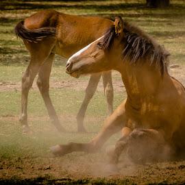Wild Horses by Melissa Goldwood - Animals Horses ( wild, mother, colt, arizona, horse, baby, salt river, mom, foal,  )