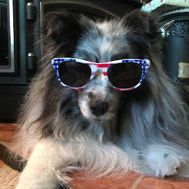 Patriotic Pup by Stephanie Parmley Givens - Animals - Dogs Portraits (  )