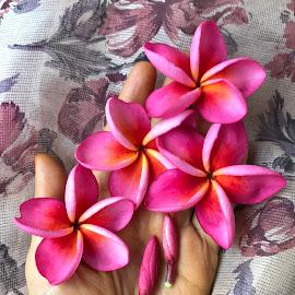 Flowers  ....🌺🌺🌺🌺✋ by Indhumathi Karthikeyan - Instagram & Mobile iPhone