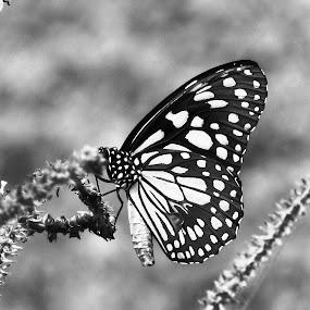 by Tina Banik - Black & White Animals (  )