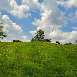 Vilage cows by Hristo Hristov - Instagram & Mobile Android ( spring, cows, grass, tree, village )