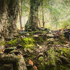Ground Level by Carole Pallier  - Nature Up Close Trees & Bushes ( trunks, moss, green, nature, roots, trees )