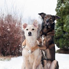 Best friends  by Linda Økseter - Animals - Dogs Portraits ( love, best friends, dogs, cute )