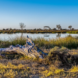 Moremi View by Dave Gale - Landscapes Waterscapes ( water, botswana, tree, landscape, moremi,  )