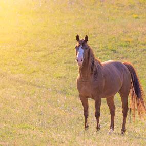 by Cenci Simone - Animals Horses