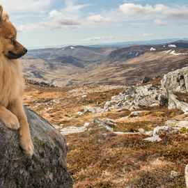 wee dog in a scottish land scape by Michael  M Sweeney - Animals - Dogs Portraits ( natural light, scotland, landscape photography, puppy, michael m sweeney, nikon, landscape, dog, pomeranian )