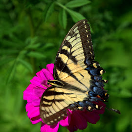 Summer Butterfly 2 by Larry Bidwell - Animals Insects & Spiders