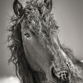 by Aleksandra Jurdana - Animals Horses