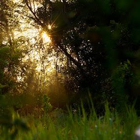 Sun beam by Mohamad Sa'at Haji Mokim - Landscapes Forests ( sunbeams, trees, pwcsunbeams-dq, morning, light, rays )