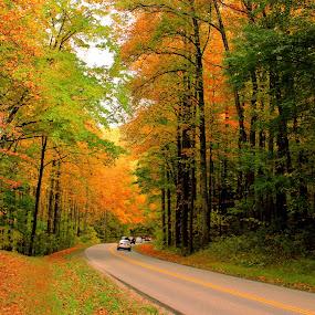 Fall Roadscape by Avishek Bhattacharya - Landscapes Travel ( fall colors, fall foliage,  )
