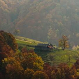 Autumn colours by George Manea - Landscapes Forests