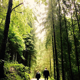 A walk by Dean Britt - Instagram & Mobile iPhone ( forest walk talk isolation )