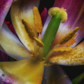 Tulip Macro by Dave Walters - Nature Up Close Other plants ( macro, magical, colors, nature up close, stamen, flower,  )