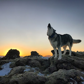 Ronja by Bjarklind Þór - Animals - Dogs Portraits ( sunrise )
