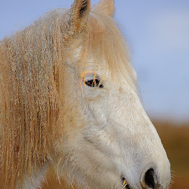 Profil by Gérard CHATENET - Animals Horses