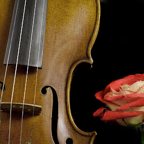 Violin and rose by Cristobal Garciaferro Rubio - Artistic Objects Musical Instruments ( music, rose, musical instrument, violin, roses, flower )