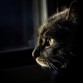 Deep thoughts  by Todd Reynolds - Animals - Cats Portraits