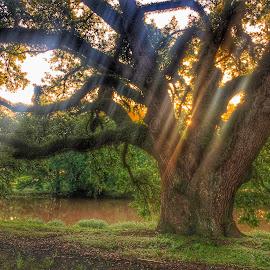 Bayou Sunrise by Zeralda La Grange - Instagram & Mobile iPhone ( #louisiana, #nature, #trees, #green, #iphone, #bayou, #sunrays, #sunrise )