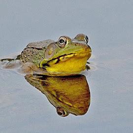 Mr Bullfrog by Bob Bissonette - Animals Amphibians ( frogs )