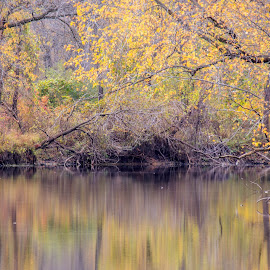 Fall Tapestry by Diane Ebert - Landscapes Waterscapes ( #fall, #landscapes, #colors,  )
