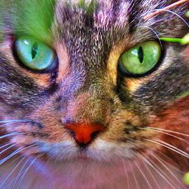 in between the plants by Luna Sol - Animals - Cats Portraits