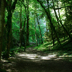 chemin sous bois by Olivier Tabary - Landscapes Forests ( chemin, sous bois, grand arbres, tronc d'arbre, vert, arbres )