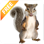 Download Android App Talking Squirrel for Samsung